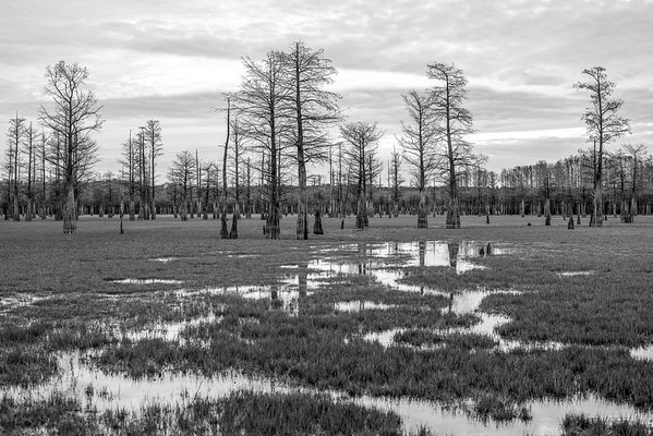 Coldwater Cypress Forest