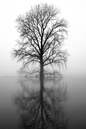 Tree In The Mississippi River