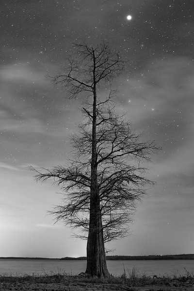 Tree at Night II