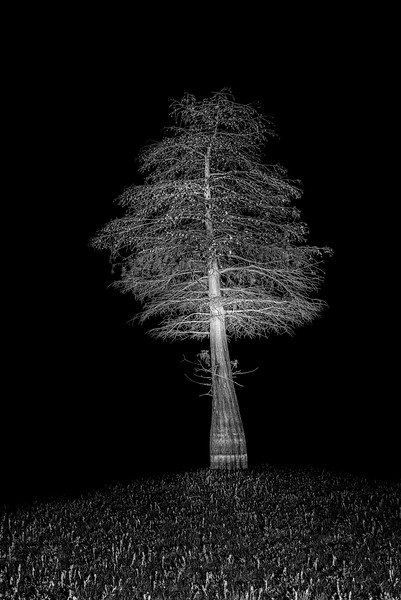 Tree at Night X
