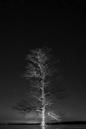 Tree at Night III