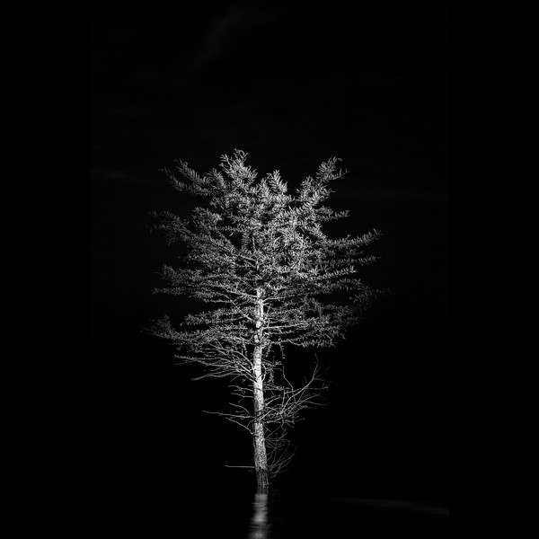 Tree at Night VI