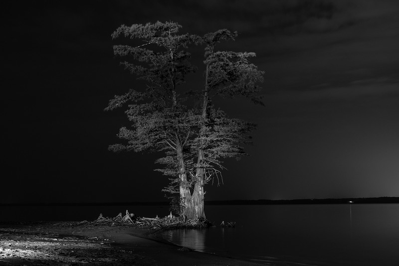 Tree at Night VII