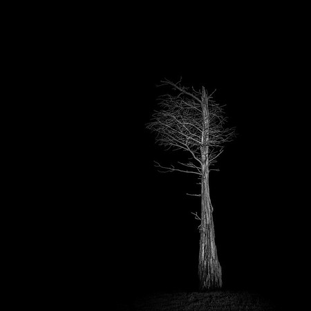 Tree at Night IX