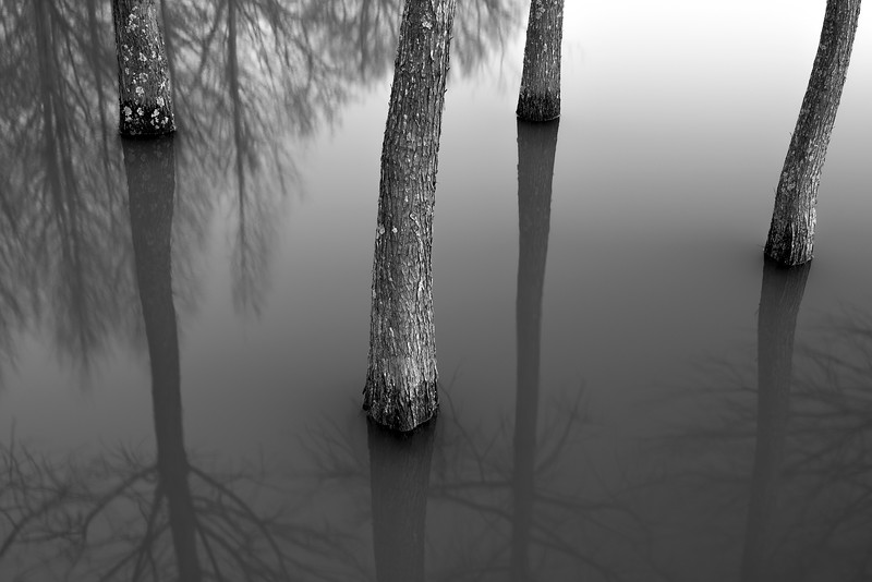 Four Trees In Tranquility II