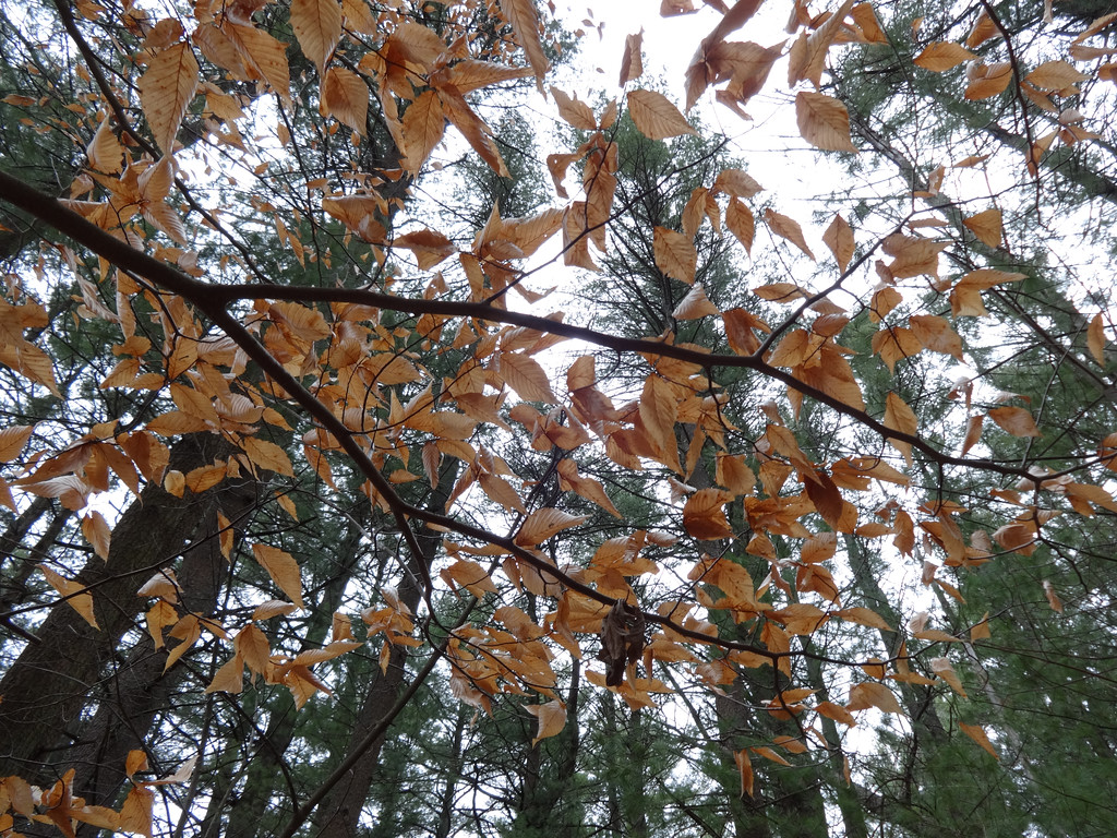 . Leaves hung on the trees that stretched above the Great Meadows National Wildlife Refuge. Photo by Mary Leach