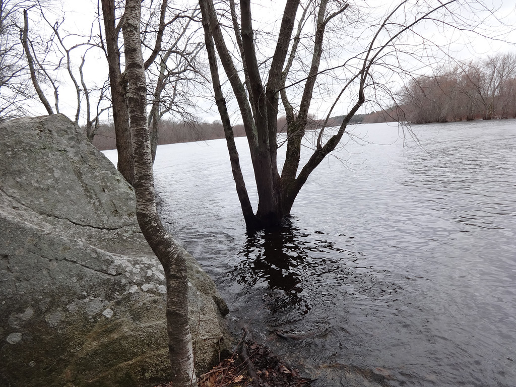 . A large boulder, which served as a monument to one of two brothers, was on the shore of the Concord River. Photo by Mary Leach
