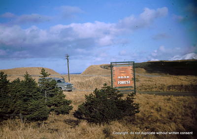 Welcome to the Adak National Forest