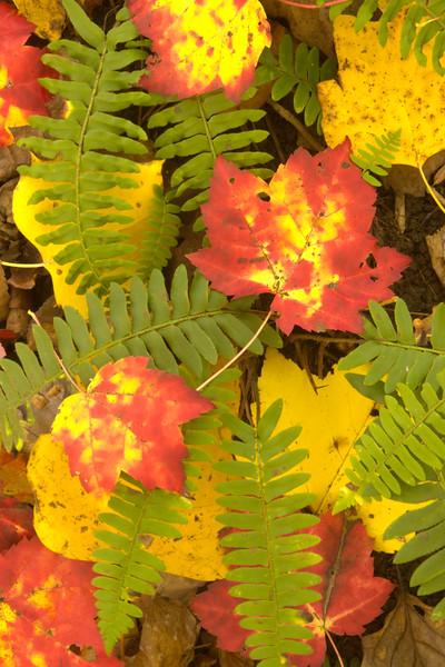 Fall, Maryland.  October 2006