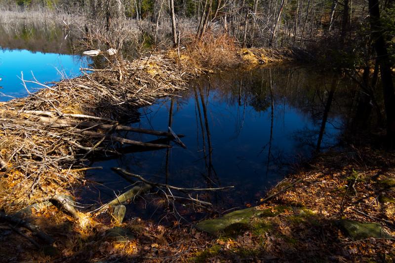 Beaver Ponds, New York.  April 2015