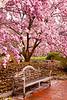 The Enid A. Haupt Garden, Washington DC.  March 2009