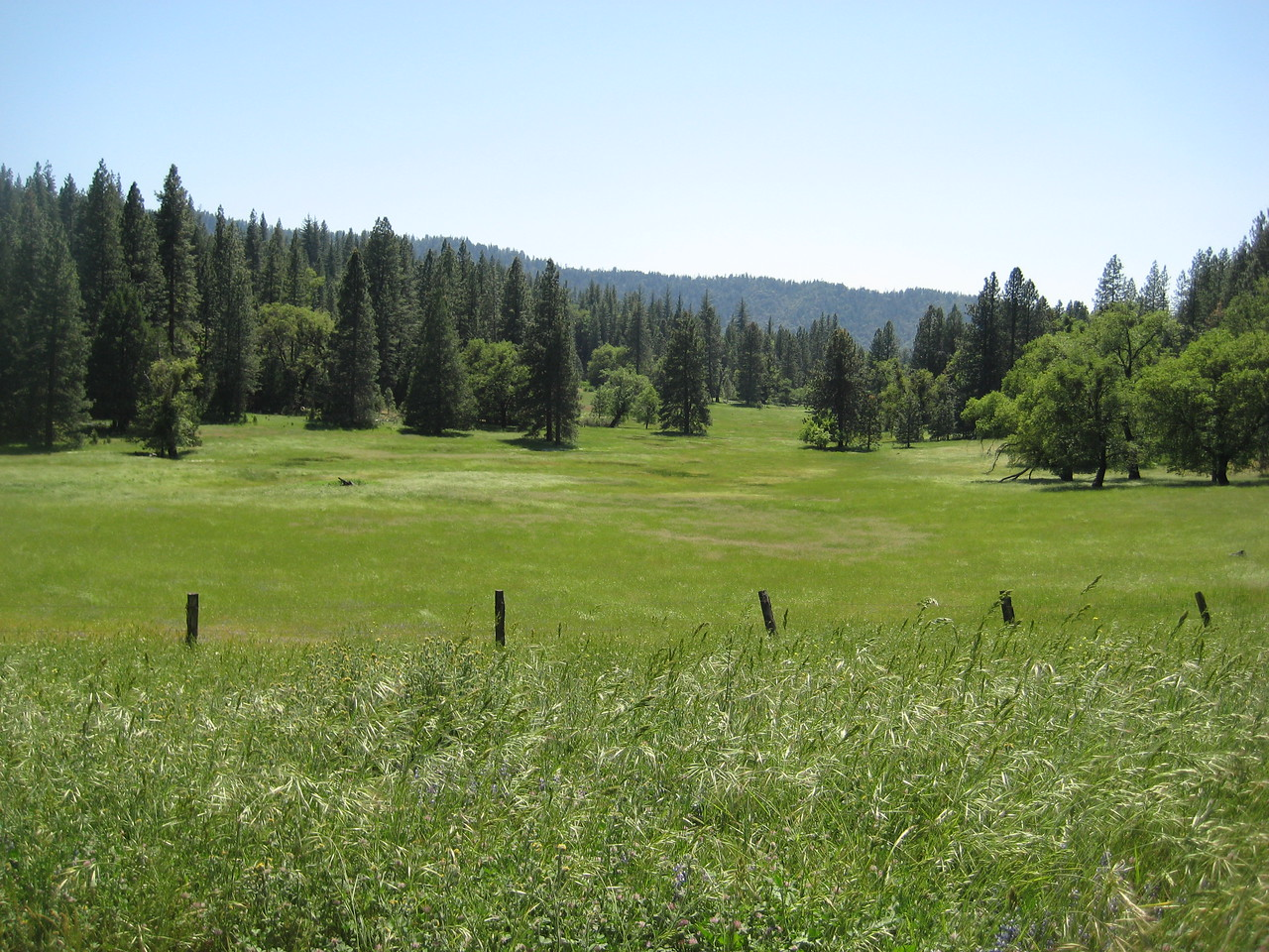 One of the many meadows we came across in the back woods.
