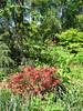 Atlanta Botanical Garden, 04/01/2012