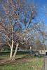 Piedmont Park. Adventure in Midtown, 03/12/2013
