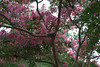 Gibbs Gardens, 08/02/2014