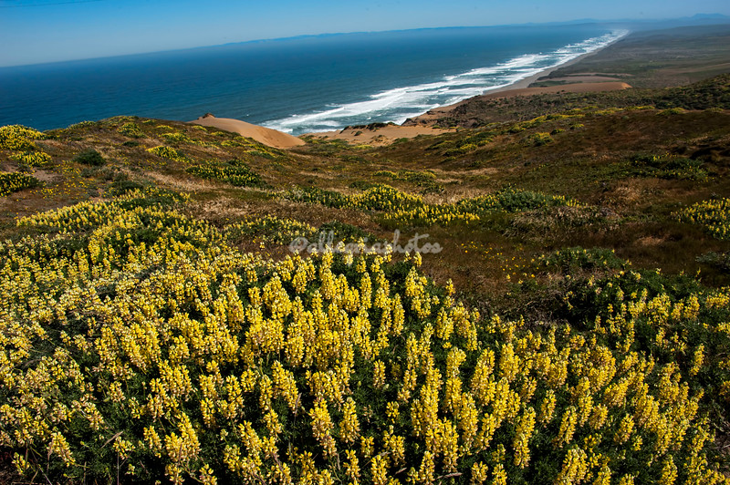 Point Reyes, California