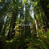 Humboldt, California