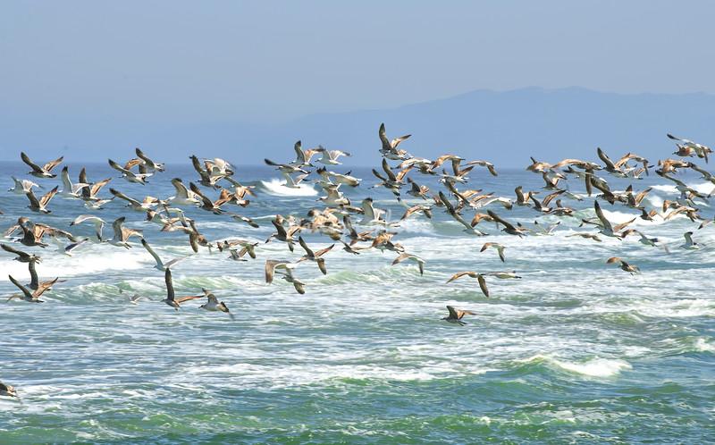 Pescadero, California