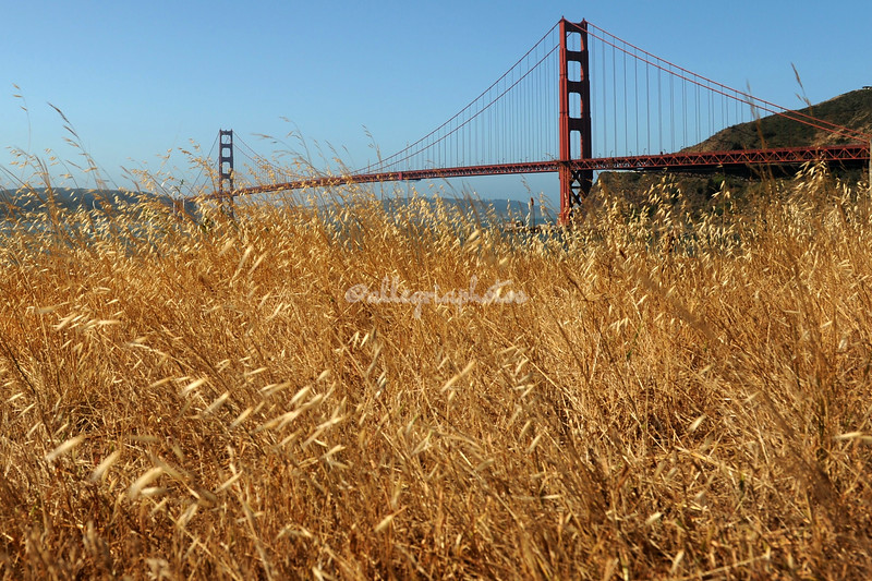 Golden Gate Bridge, Marin County