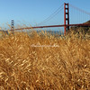 Golden Gate Bridge, Marin County