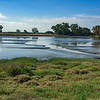 Baylands Nature Reserve, Palo Alto, California