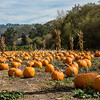 Pumpkin Patch, Half Moon Bay