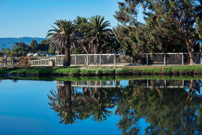 Reflections, Baylands, Palo Alto