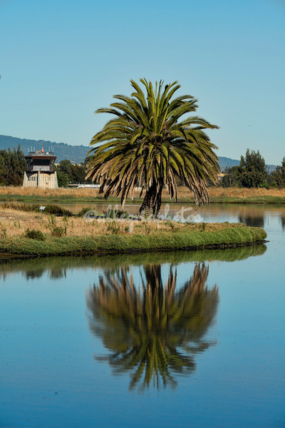 Baylands Nature Reserve, Palo Alto, California