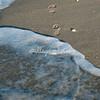 Sanibel footprints