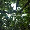 Hawaiin Tropical Botanical Gardens