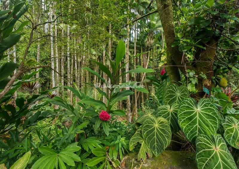 Tropical Botanical Garden, Hilo