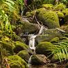 Botanical Garden, Hilo