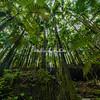 Hawaian Tropical Botanical Gardens