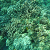 Coral Reef in Kealakekua Bay