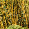 Bamboo at Hawaii Botanical Tropical Gardens