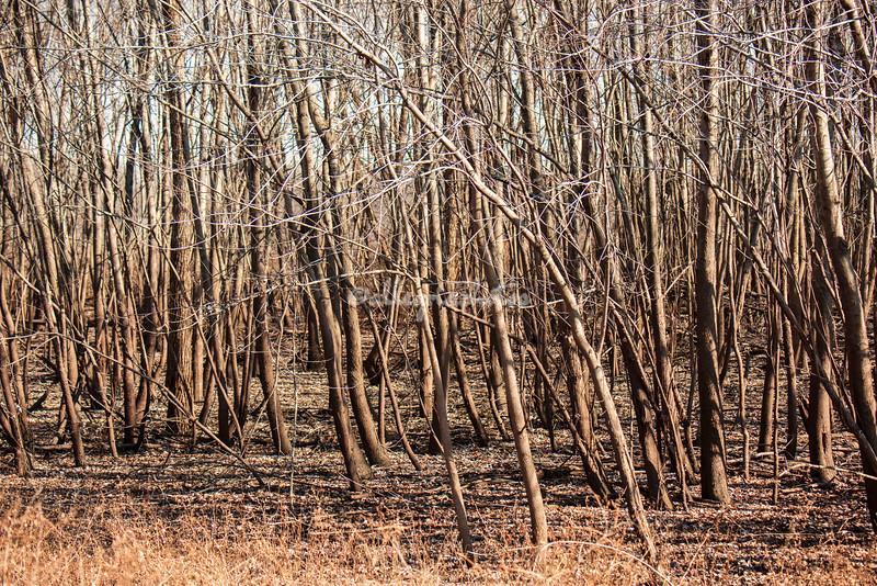 Winter Wood, Gilbert Lake, Illinois