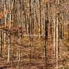 Winter Wood, Elsah