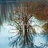 Reflections on Gilbert Lake, Grafton
