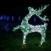 Dancing Stag