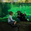 St Louis Zoo Hippo Pool