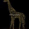 Wild lights giraffe, St Louis zoo