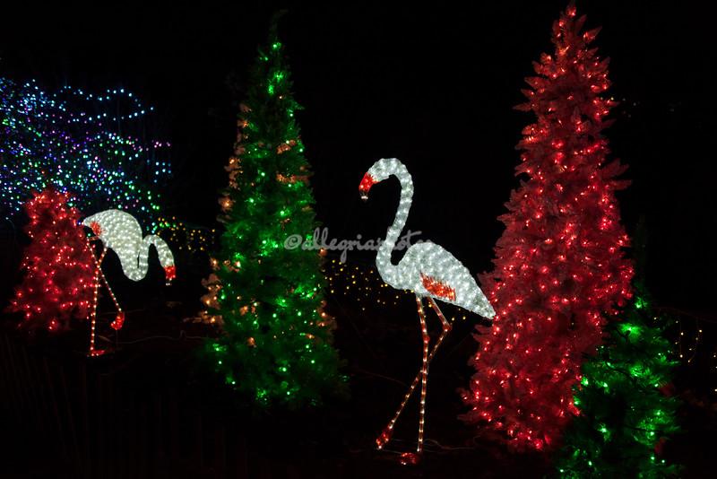 Flamingos, Wild Lights, St Louis Zoo