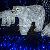 Polar Bears, Wild Lights, St Louis Zoo