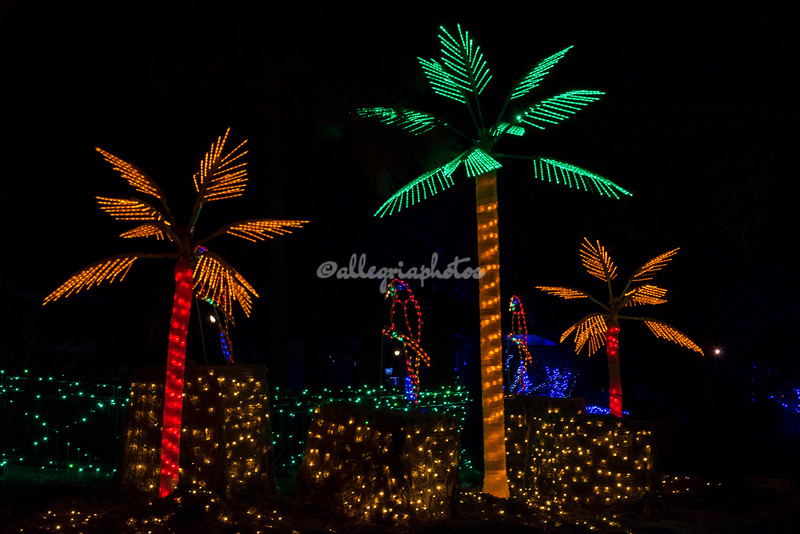 "Jungle Christmas, ""Wild Lights"", St Louis Zoo"