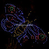 Butterfly, Wild Lights, St Louis Zoo