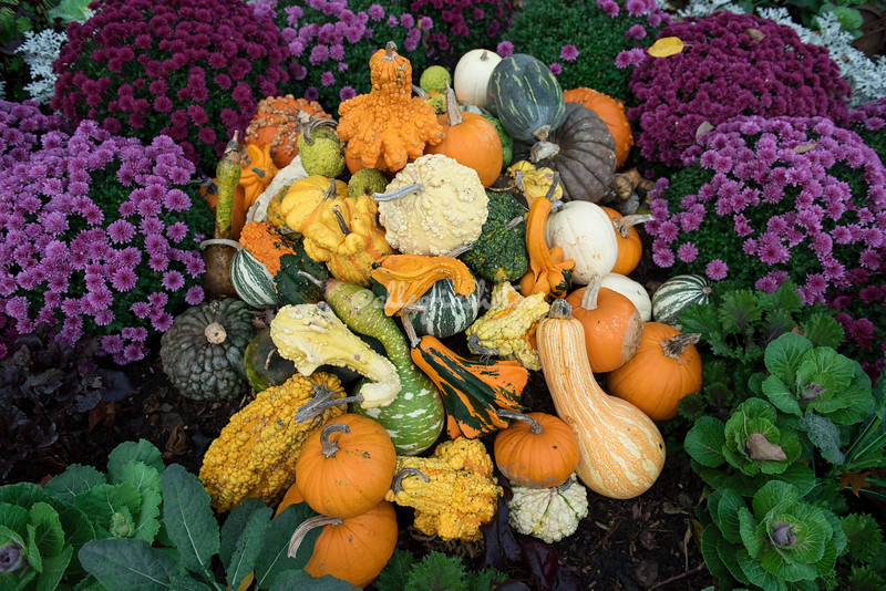 Autumn flowers and vegetables