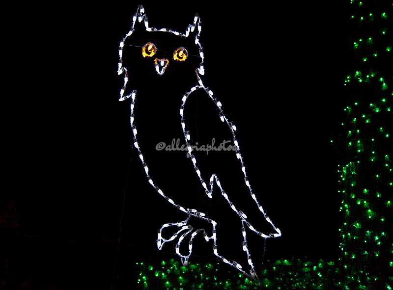 "Horned Owl, ""Wild Lights"", St Louis Zoo"
