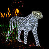 "Cheetah, ""Wild Lights"", St Louis Zoo,"
