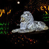 "Lion, ""Wild Lights"", St Louis Zoo"