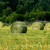 Freshly harvested hay, Montana